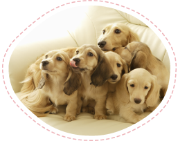 予防接種犬の写真